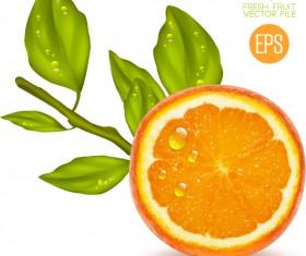 Juicy slice oranges vector set 03
