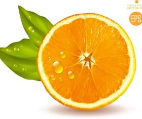 Juicy slice oranges vector set 04
