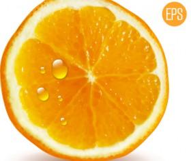 Juicy slice oranges vector set 05