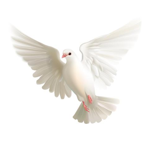 White pigeon realistic vector design 02