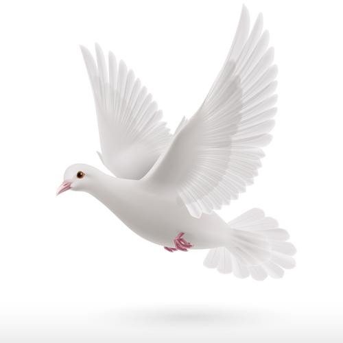 White pigeon realistic vector design 04