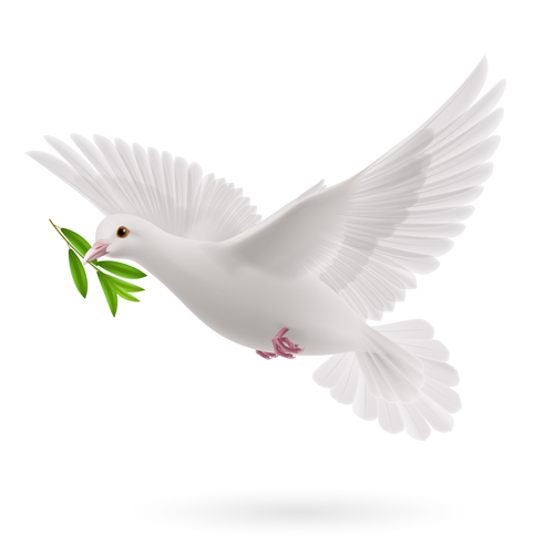 White pigeon realistic vector design 05