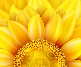 Beautiful sunflowers golden background set vector 04