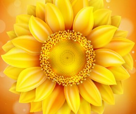 Beautiful sunflowers golden background set vector 08