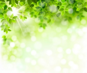 Sunlight with green leaves shiny background vector 01