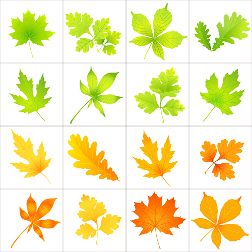 Beautiful autumn leaves icons vector 01