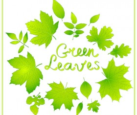 Shiny green leaves vector background