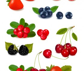 Vivid berry design elements vector 01