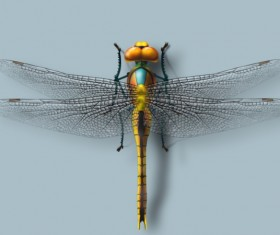 Realistic dragonfly PSD material
