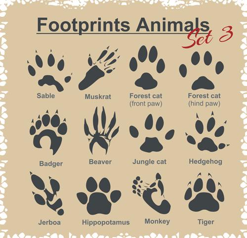 Various footprints animals design vectors 01