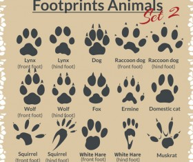 Various footprints animals design vectors 05
