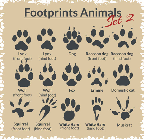 Various footprints animals design vectors 05