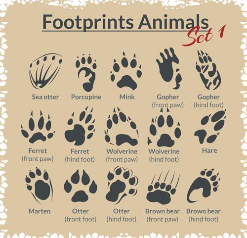 Various footprints animals design vectors 06