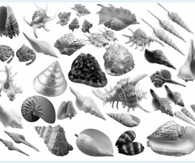 Different Conch and Shell Photoshop Brushes