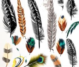 Different colorful feathers vector material