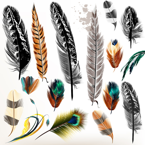 186175 Different Colorful Feathers Vector Material on funny cartoon animals labels vector
