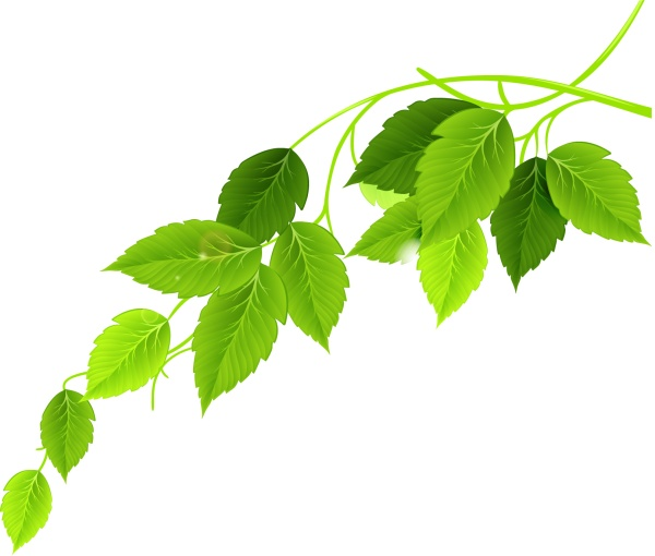Green Leaves Psd Material Free Download