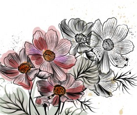 Hand drawn cosmos flowers vector