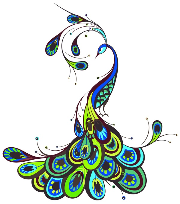 Peacock Beautiful Vector Free Download