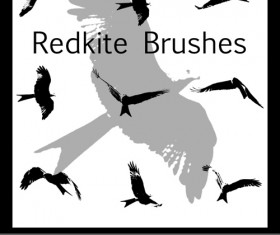 Birds kite Brushes
