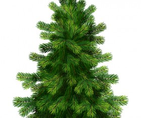 Christmas green fir-tree vector material 05