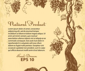 Hand drawn grapes background vintage vector 03