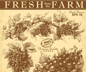Hand drawn grapes background vintage vector 04