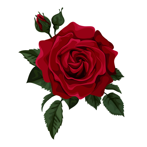 Red Rose Realitic Vector 01 Free Download