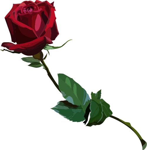 Red rose realitic vector 04 - Vector Flower free download