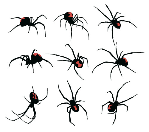 Realistic spider vector material 01 - Vector Animal free ...