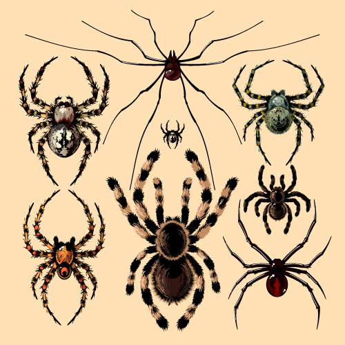 Realistic spider vector material 05 - Vector Animal free ...