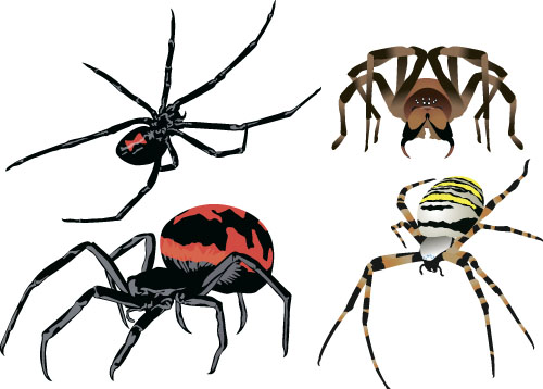 Realistic spider vector material 06 - Vector Animal free ...