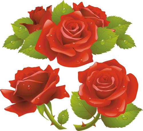 Red rose illustration vector 02
