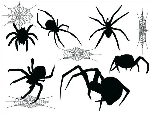 Spider Vector Free Download | www.pixshark.com - Images ...
