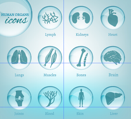 Human organs icons set 01
