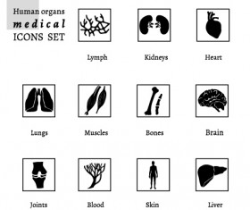 Human organs medical icons set
