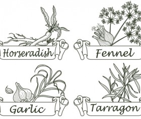 Hand drawn herbs and spices labels vector 04