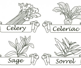 Hand drawn herbs and spices labels vector 05
