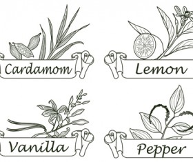 Hand drawn herbs and spices labels vector 06