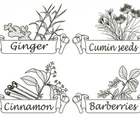Hand drawn herbs and spices labels vector 09