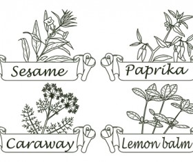 Hand drawn herbs and spices labels vector 10