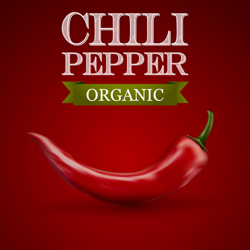 Organic chili pepper poster vector 01