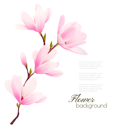 Pink Magnolia Flower Background Vector 04 Free Download