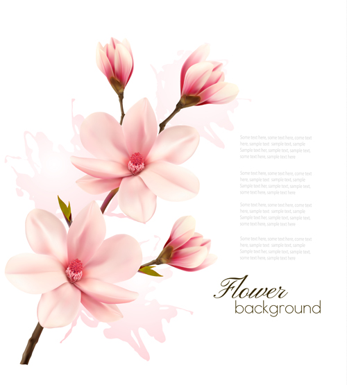 Pink Magnolia Flower Background Vector 05 Free Download