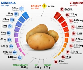 Potato vitamins infographics vector