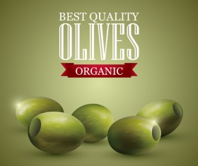 Quality organic olives vector graphics 02