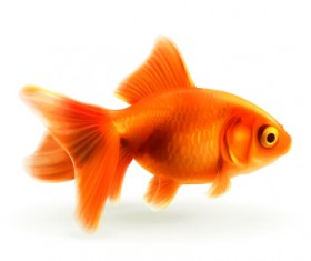Red goldfish vector