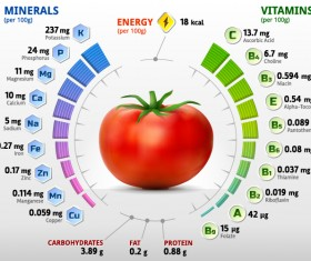 Tomato vitamins infographics vector
