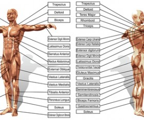 Vector human structure graphic set 09