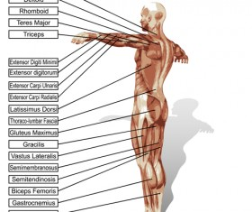 Vector human structure graphic set 10